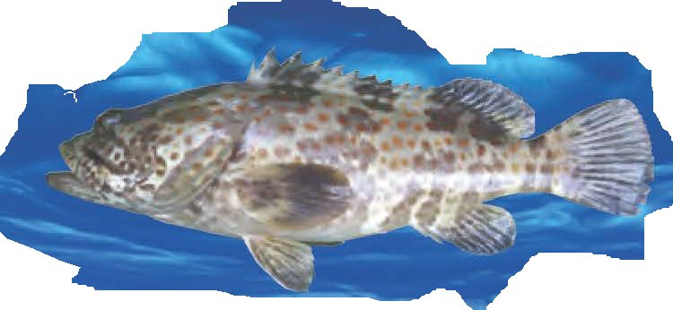 FISH PICTURE 02